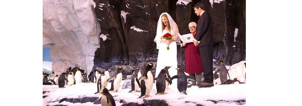 scott island wedding