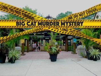 big cat murder mystery